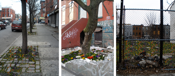 bed-stuy-meadow-transforming-a-neighborhood-with-flowers-2