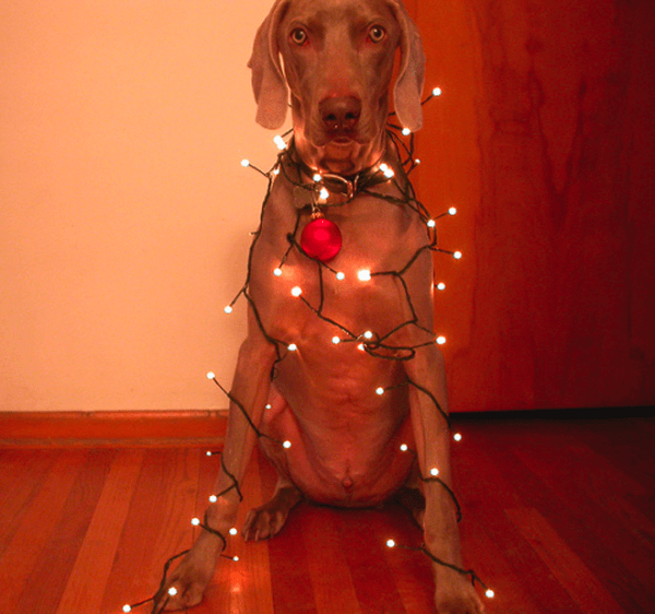 dog_lights