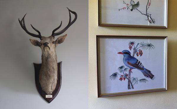 Deer birds