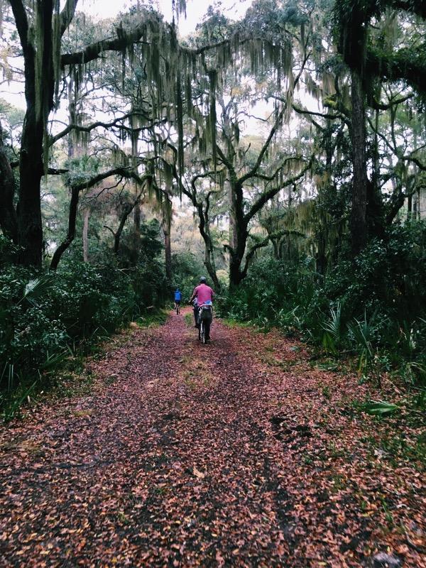 Aesthetics of Joy Georgia forest