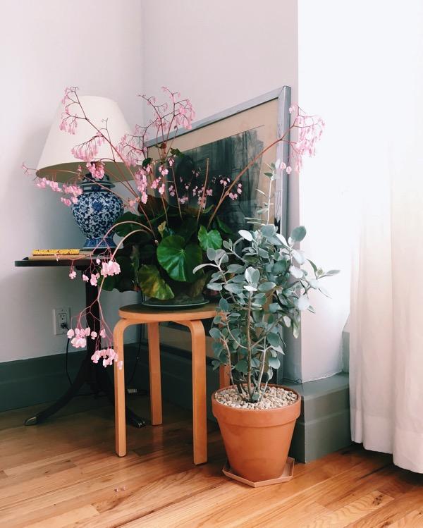 Aestheticsofjoy houseplants1