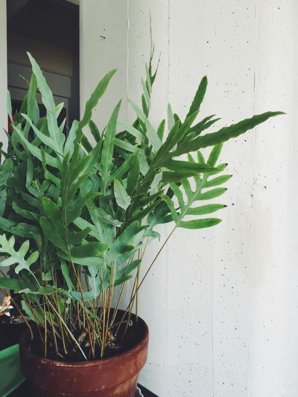 Aestheticsofjoy houseplants3